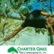 Charter Oaks